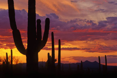 arizona-sunset