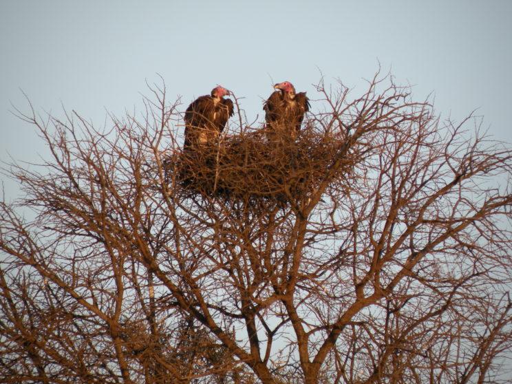 gli-avvoltoi