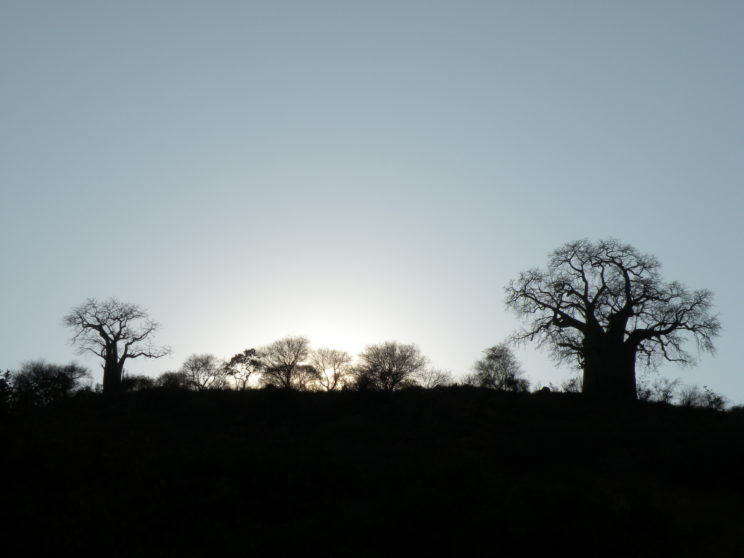 i-baobab