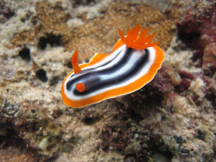 il-nudibranco-8