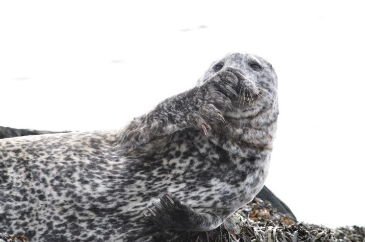 islanda-2015-293