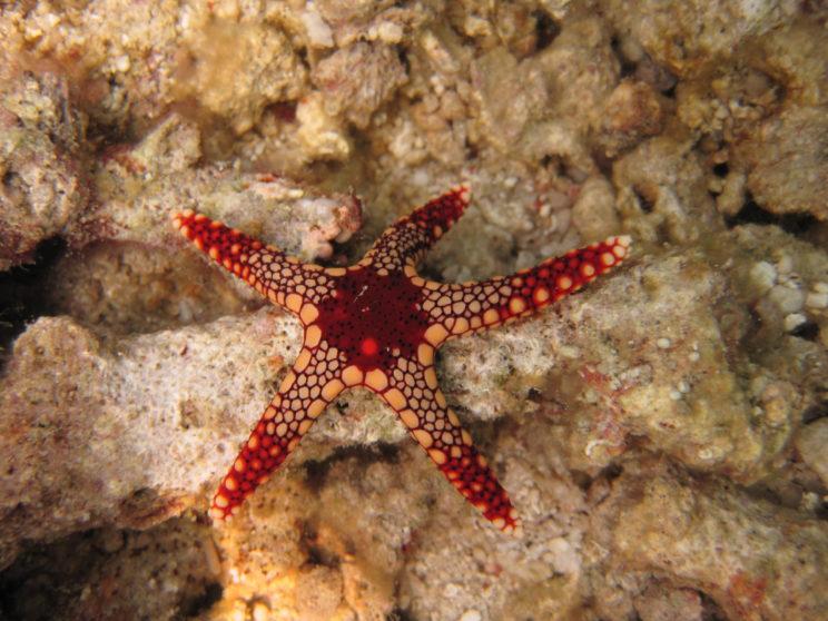 la-stella-marina-1