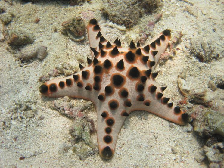 la-stella-marina-2