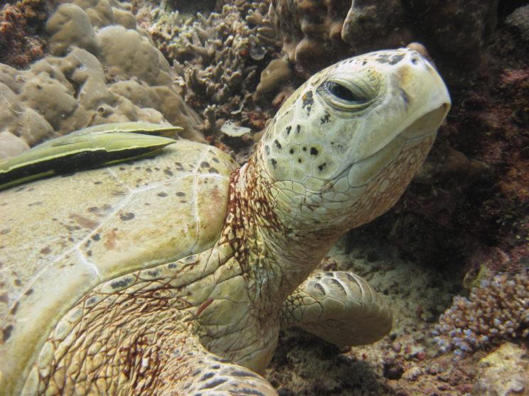 la-tartaruga-e-le-remore-2