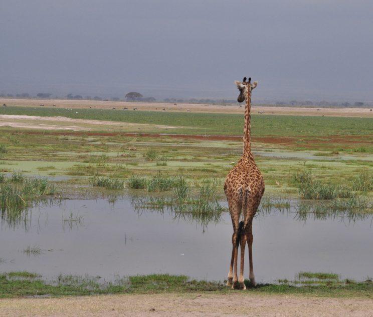Kenya (77)