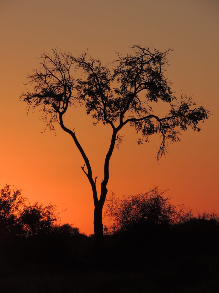 tramonto Madikwe2