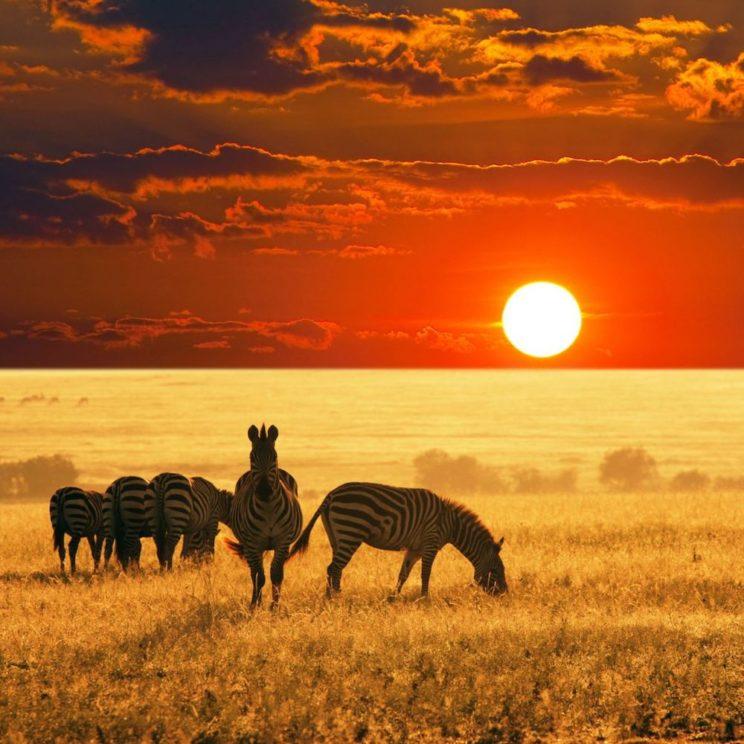 banner_sudafrica