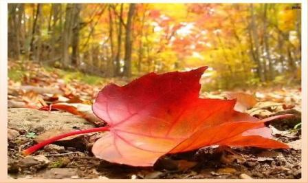 autunno-1